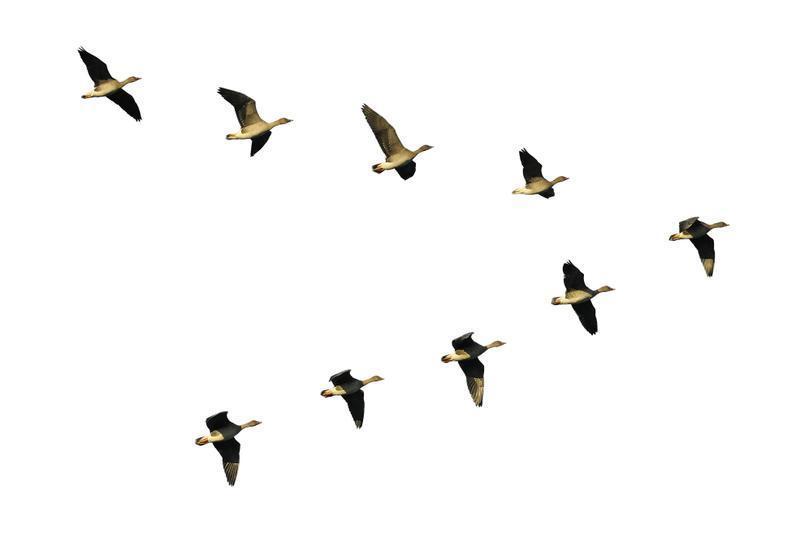 self organizing birds