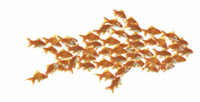 fish cas